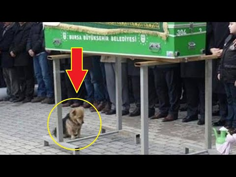 Собака пришла на похороны. То , что произошло дальше не передать словами