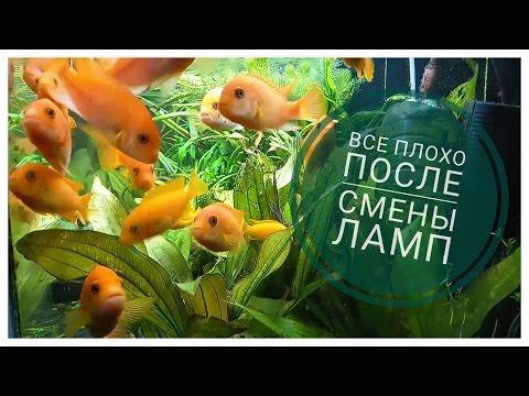 Аквариумы - купить рыбок, фильтры и насосы для аквариума в