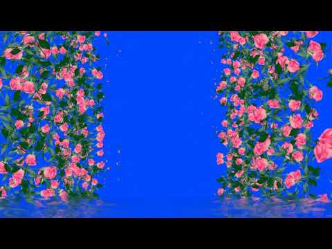 Futaz for video editing  -   Beautiful roses in motion - Beautiful flowers thumbnail