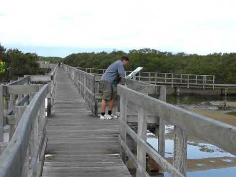 Boardwalk at Urunga