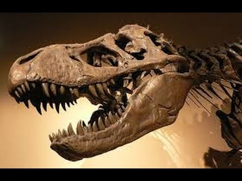 Scientists Baffled- Soft Tissue Found in Dinosuar Bones, Darwinian Evolution Crumbling