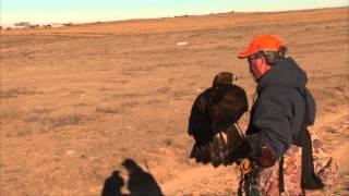 Oklahoma Falconry (basics, rabbit hunt with a golden eagle)