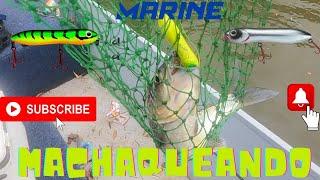 machaqueando con señuelos marine