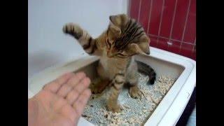販売状況は公式ブログで ↓ http://blogs.yahoo.co.jp/xll_dog_and_cat_l...
