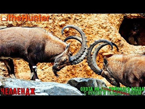 ♢ TheHunter Classic ➫ Челлендж ➫ Apline Ibex Vs Shotgun ➫ Альпийский козёл ♢