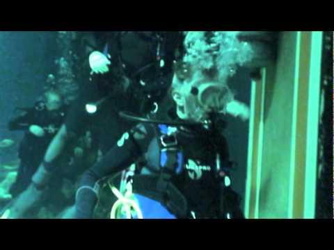 Marine Mammal Interns - The Seas