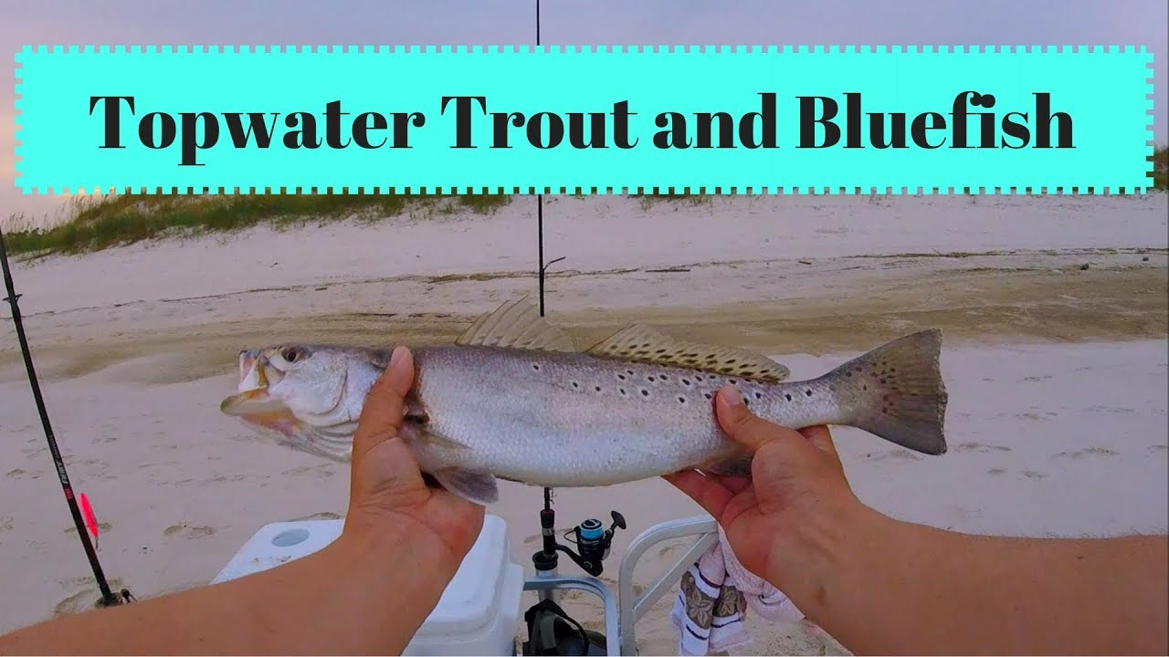 Topwater Speckled Trout and Bluefish - GULF SHORES Alabama SURF FISHING