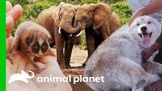 🔴 Incredible Wildlife On Animal Planet