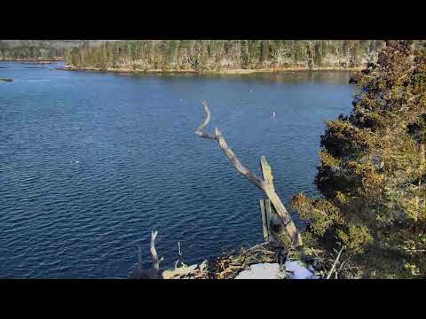 Audubon Osprey Nest Cam 03-17-2018 05:29:27 - 06:29:28