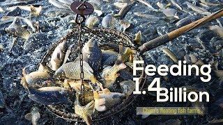Feeding 1.4 billion  China's floating fish farms