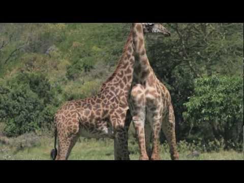 Tanzania Safari: Arusha & Ngorongoro