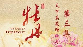 牡丹是中国文化的一个标志性符号,现实的牡丹,以及牡丹背后的中华文化...