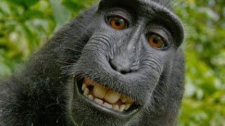 Monkeys Spinning Monkeys Kevin Macleod 2 Hours Extended
