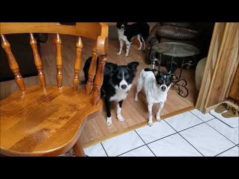3 15 2019 Skye Spot;meat grinder; dogs barking;playing