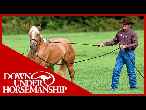 Clinton Anderson: Training a Rescue Horse, Part 1 - Downunde