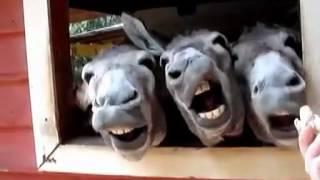 超超超面白い動物、皆一緒に笑おう~~ DORISQUEEN高級ドレス、手作りの...