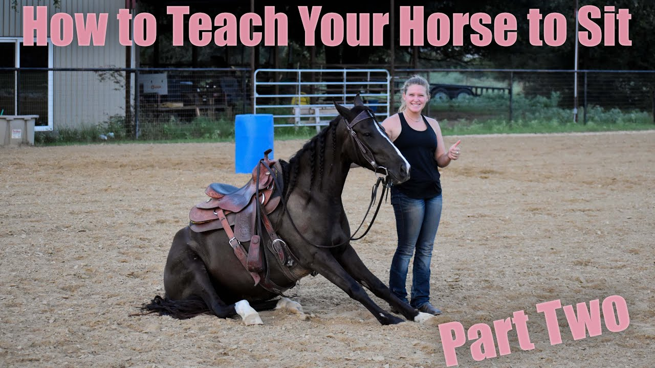 How To Teach Your Horse To Sit   Part Two