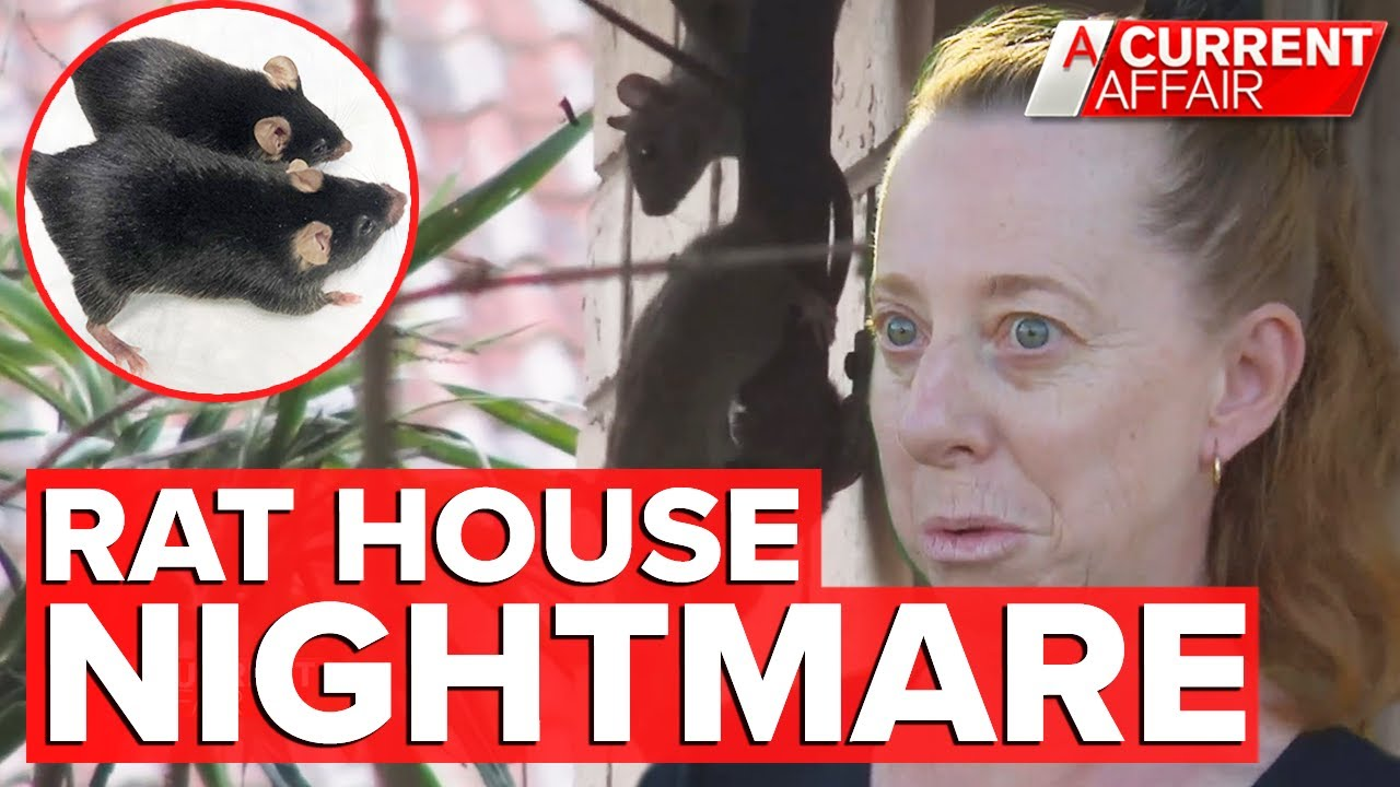 The 'rat house' leaving neighbours worried about their health | A Current Affair