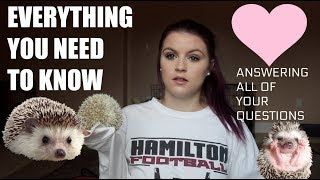 WHAT YOU NEED TO KNOW BEFORE GETTING A HEDGEHOG