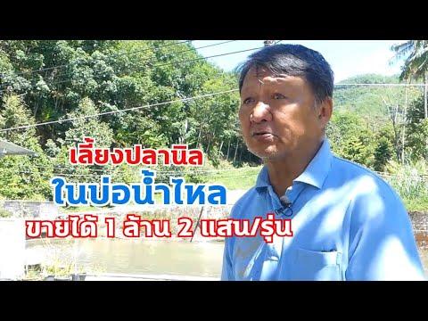 เลี้ยงปลานิลในบ่อน้ำไหลขายได้ 1 ล้าน 2 แสนต่อบ่อ ขอบคุณหนึ่งล้านวิว