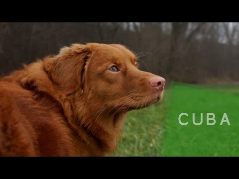Get to know | Cubas Libre