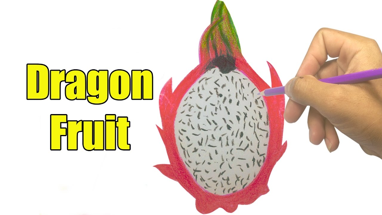 How To Draw A Dragon Fruit Easy  Drawing A Delicious Fruit Fast  Youtube  Videos