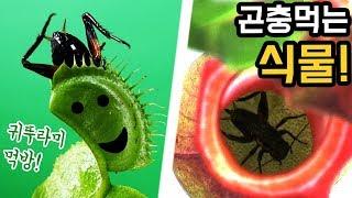 곤충 먹는 식물?! 파리지옥, 끈끈이귀개목 관찰! 밀웜,귀뚜라미,개미 먹이기!  _ 에그박사와 곤충친구들