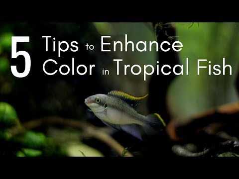 5 Tips For Enhancing Color In Tropical Fish