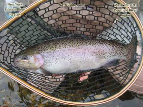 Salmon river ny and deerfield river ma fly spey fishing for Salmon river ny fishing regulations