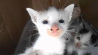 kitten attacks big cat