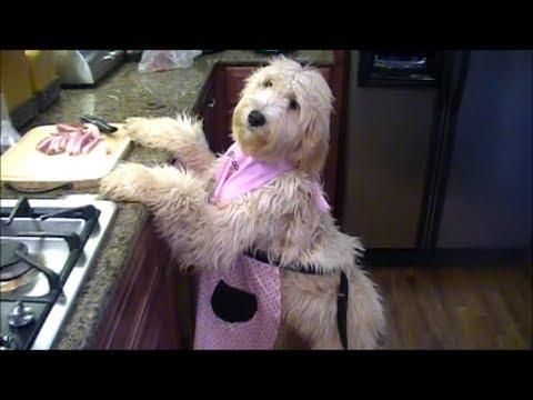 doodle dog duties 3 youtube