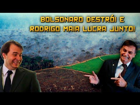 Rodrigo Maia é tão responsável pela destruição da Amazônia quanto Bolsonaro