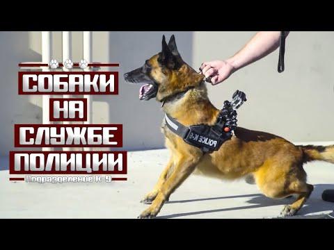 Подразделение К-9 : Собаки на службе полиции США