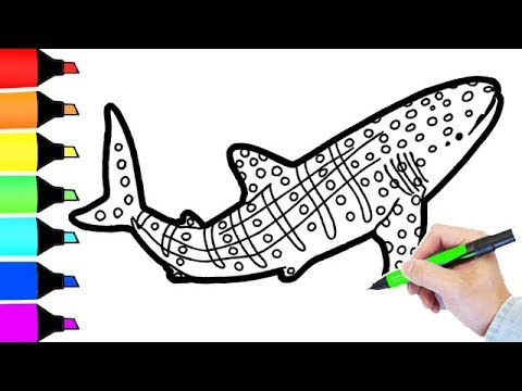 Whale Shark Coloring Book Pages for Children Fun colouring for kids ...