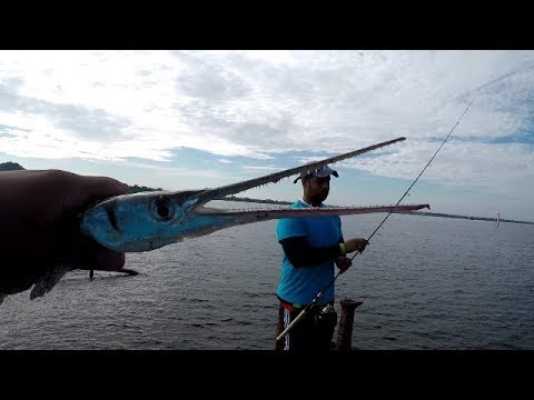 WRECK FISHING - Exploring NEW Spots! - Inshore Fishing - Trinidad, Caribbean