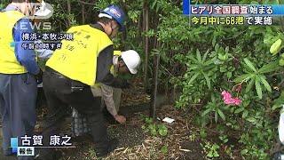 強い毒を持つヒアリが国内で相次いで確認されている問題で、環境省など...