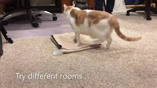Cat Training 'On Your Mat'