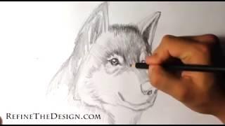 Drawing a Wolf Tattoo - Tattoo Drawings