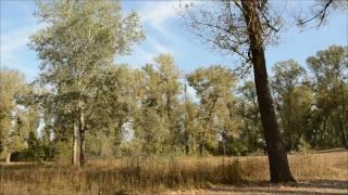 Спасем лес возле реки Ворскла! (Приречный парк, Полтава)