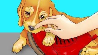 Yeni Yavru Köpeğinizi Eğitmenin 10 Kolay Yolu