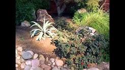 Tucson Real Estate Appraisers