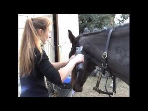 How To Clip • Clipping A Horses Head And Bridle Path