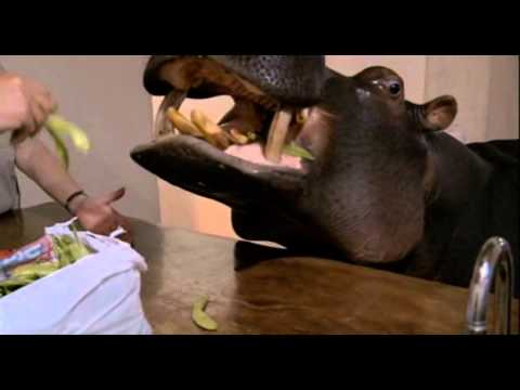 Karl Pilkington visits pet hippo in South Africa