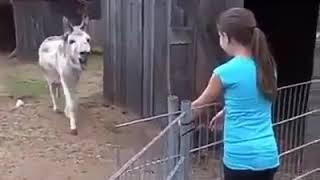 Download Video Keledai yg menangis berjumpa kembali dgn gadis kecil majikan MP3 3GP MP4