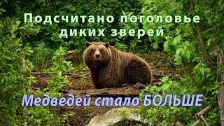 Медведи расплодились. Сколько в России диких зверей?