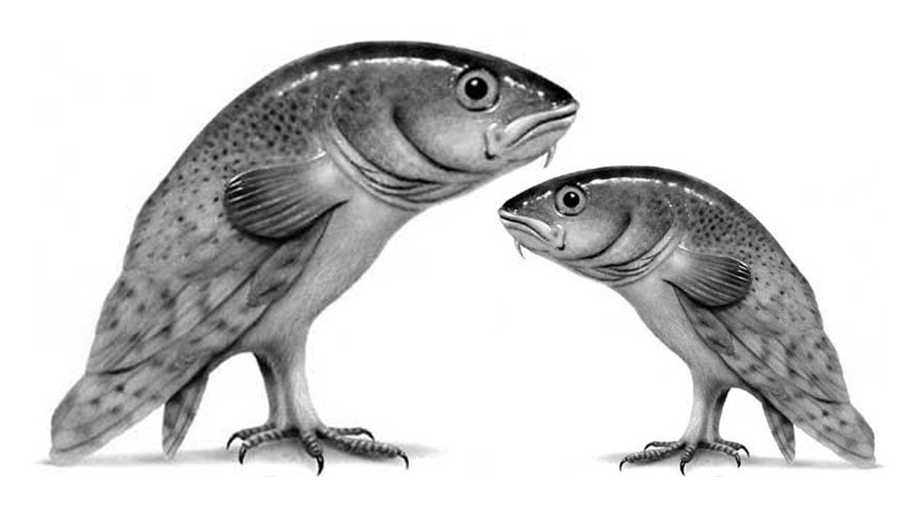 Scientist discover walking fish youtube for The walking fish