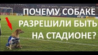 Что делает собака на футбольном поле во время матча? Невероятная история о дружбе тренера и собаки