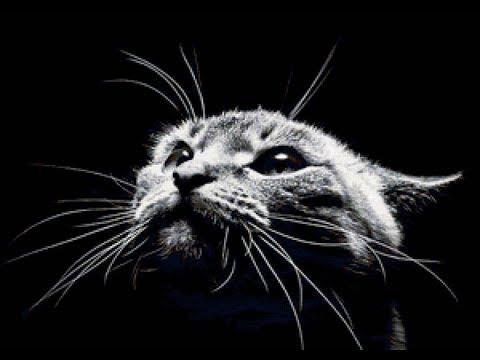 Как нарисовать кошку на ногтях: фото и видео инструкции