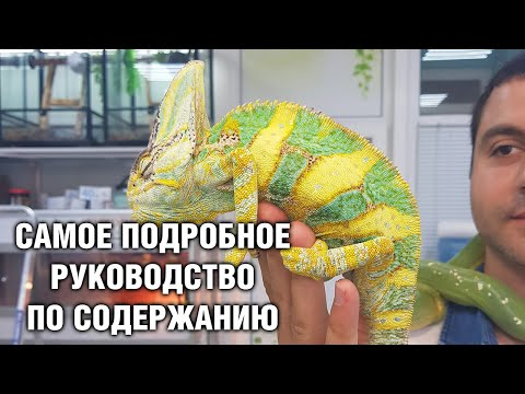 Фото хамелеона в домашних условиях