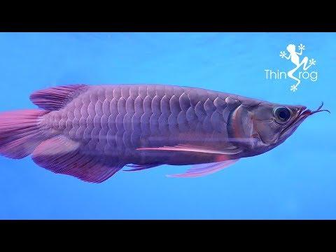 Visited Aquarium Shop At Shah Alam (Xian Long Aquatic)